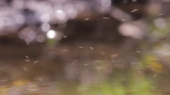 Thousands of insects flying erratically over an puddles in the woods 74a Stock Footage