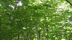 Looking at dense crown of trees overhead 49 Stock Footage