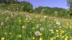 Wildflowers near the forest dense deciduous Stock Footage