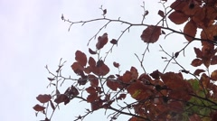 Branches bare of leaves in hardwood 63 - stock footage