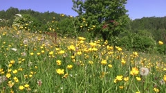 Wildflowers near the forest dense deciduous 78 Stock Footage