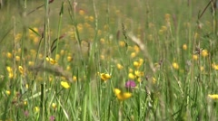 Eyes looking through green grass with wild flowers and forest that surrounds Stock Footage