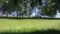 Looking through dense birch forest lined by a meadow with green grass 18 - stock footage