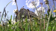 Dandelion fluff and yellow flowers in the warm summer wind and a barn abandon Stock Footage