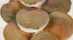 Raw scallop on white background close up rotation. Stock Footage