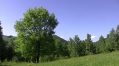 Panorama over the green forest and field with yellow flowers Stock Footage