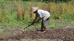 Old woman farmer holding spade at field. Bali, Indonesia - stock footage