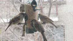 Sparrows feeding at a backyard bird feeder Stock Footage