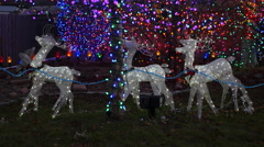 Reindeer Christmas Ornaments Outdoors Light Up Stock Footage