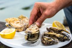 Male hand holding oysters - stock photo