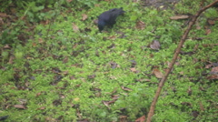 Black crow in green grass Stock Footage