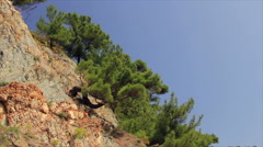 Pines on cliff Stock Footage