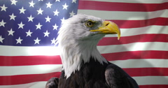 4K Close up of American Bald Eagle against animated background of American flag  - stock footage