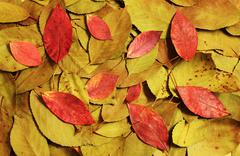 Composition of autumn dry red and green leaves Stock Photos