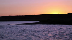 Seals Swimming In Rogue River At Sunset Stock Footage