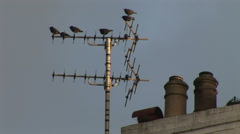 Birds on aerial in Seaside town with chimney pots Stock Footage