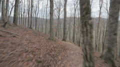 Forest Path Hyperlapse Mammoth Cave National Park Kentucky Hiking Trail Stock Footage