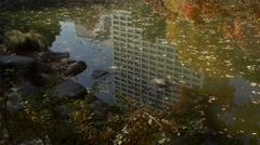 Autumn leaves by a pond in a city park in Tokyo, Japan Stock Footage