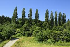 Beautiful hardwood trees in suburbs of Prague - stock photo