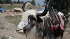 Himachal Shimla 04 Stock Footage