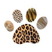 Wild animal footprint Stock Photos