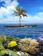 Beautiful island with palm trees and blue sky. Yellow fish underwater Kuvituskuvat