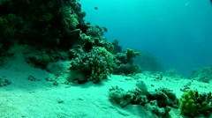mysterious world under water - stock footage