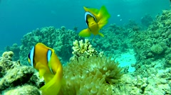 funny fish - stock footage