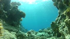Underwater life under the sea. - stock footage
