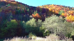 Autumn colors. Mountain forest in morning light Stock Footage