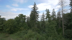 Forest near the Rasnov Citadel Stock Footage