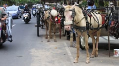 Horse and cart expect customers in Bali, Indonesia Stock Footage