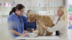 4K Veterinarian examining cute dog & talking to owner Stock Footage