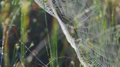 Close-up of a spider in a web Stock Footage
