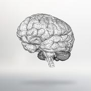 Vector illustration human brain. The structural grid of polygons. Abstract Stock Illustration