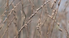 Dry winter grass in countryside field - stock footage