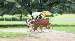 Non identify in horse-drawn carriage drive in farm Stock Footage