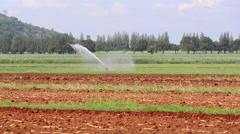 Sprinkler irrigation with mountain in the background - stock footage