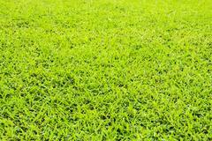 Green grass background - stock illustration