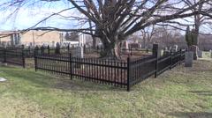 A Deadman's Tree Stock Footage