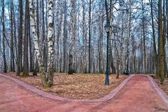 Birch alley in autumn park with paths for pedestrians - stock photo