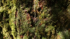 Steam with a litte waterfall on Madeira island Stock Footage