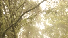 Tree with moss in the subtropics, Madeira Island, Portugal Stock Footage