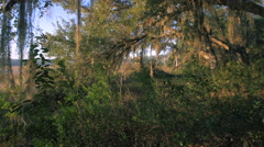 Spanish Moss Forest Stock Footage