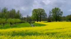 East Frisians rape field Stock Footage