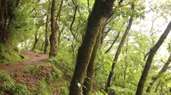 Levada hiking trail on Madeira island Stock Footage