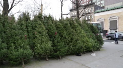 Christmas Tree In New York City NYC Winter Time - stock footage