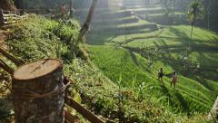 Rice Terraces Girls slow motion Stock Footage