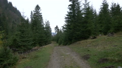 Forest path in Rodna Mountains, near the Horses Waterfall Stock Footage