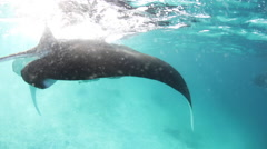 Manta Ray Feeding at Surface Stock Footage
